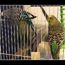 North Carolina Pet Bird Rescue - ADOPTIONS - Rescue Me!