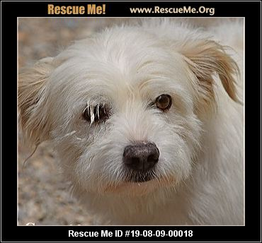 Colorado Westie Rescue - ADOPTIONS - Rescue Me!