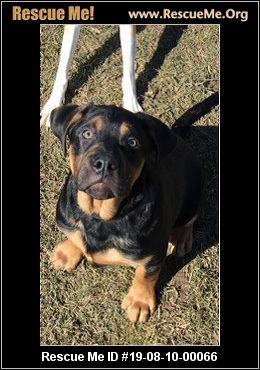 New York Mastiff Rescue - ADOPTIONS - Rescue Me!