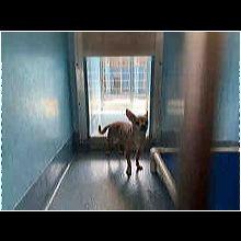 Iowa Chihuahua Rescue - ADOPTIONS - Rescue Me!