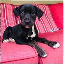 Michigan Dog Rescue - ADOPTIONS - Rescue Me!