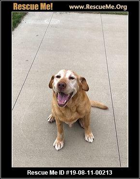 South Dakota Lab Rescue - ADOPTIONS - Rescue Me!