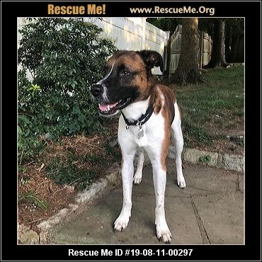 New York Saint Bernard Rescue - ADOPTIONS - Rescue Me!