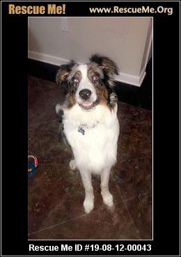 Arkansas Australian Shepherd Rescue - ADOPTIONS - Rescue Me!