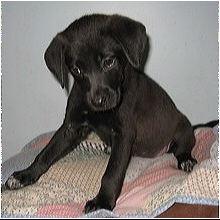Alabama Dog Rescue - ADOPTIONS - Rescue Me!
