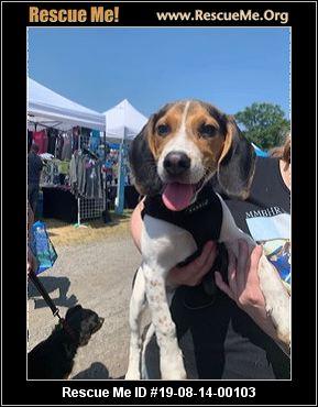 Magic's Mission Beagle and Hound Rescue - Buffalo, NY