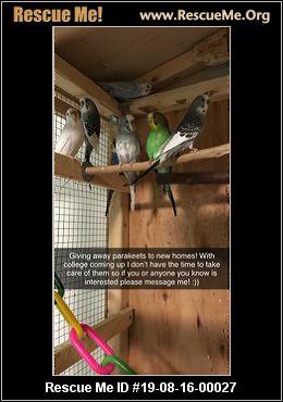 Connecticut Pet Bird Rescue - ADOPTIONS - Rescue Me!