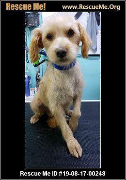 Arizona Border Terrier Rescue - ADOPTIONS - Rescue Me!