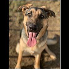 Georgia Dog Rescue - ADOPTIONS - Rescue Me!