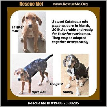 Arkansas Catahoula Rescue - ADOPTIONS - Rescue Me!