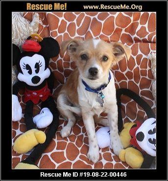 Arizona Small Dog Rescue - Phoenix, AZ - AVAILABLE PETS