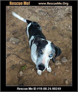North Carolina Catahoula Rescue - ADOPTIONS - Rescue Me!