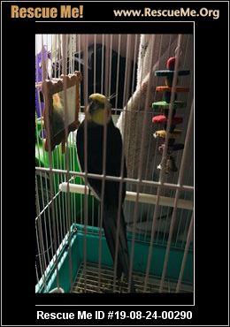 Florida Pet Bird Rescue - ADOPTIONS - Rescue Me!