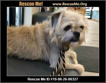 Iowa Westie Rescue - ADOPTIONS - Rescue Me!