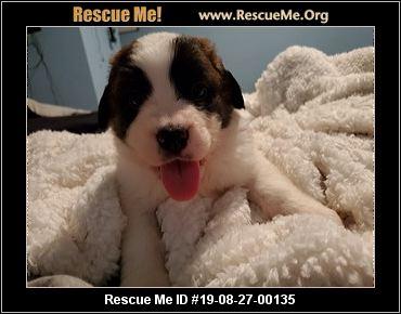 California Saint Bernard Rescue - ADOPTIONS - Rescue Me!