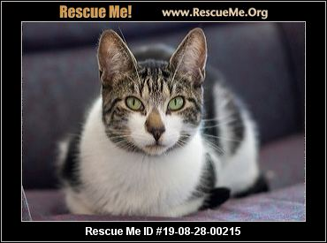Fuzzy Pawz Rescue - Boise, ID - AVAILABLE PETS