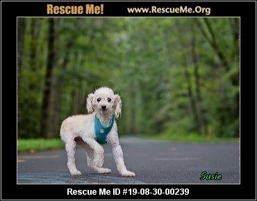 Pennsylvania Poodle Rescue - ADOPTIONS - Rescue Me!