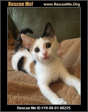 North Carolina Cat Rescue Adoptions Rescue Me