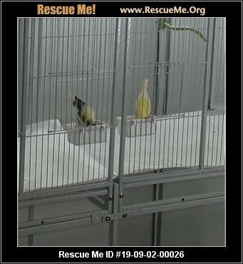California Pet Bird Rescue - ADOPTIONS - Rescue Me!