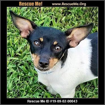 Virginia Rat Terrier Rescue - ADOPTIONS - Rescue Me!