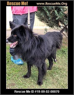 Pennsylvania Pomeranian Rescue - ADOPTIONS - Rescue Me!