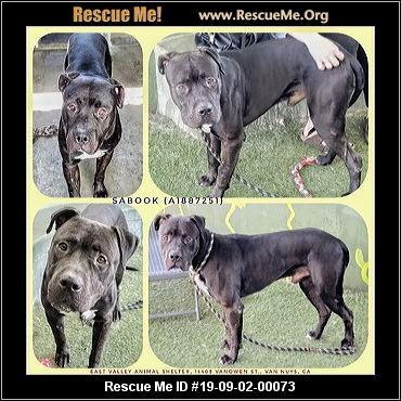 California Mastiff Rescue - ADOPTIONS - Rescue Me!