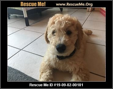Washington Poodle Rescue - ADOPTIONS - Rescue Me!