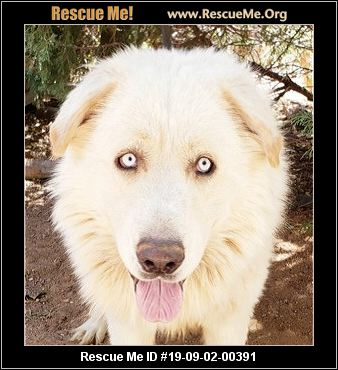 New Mexico Mutt Rescue - ADOPTIONS - Rescue Me!