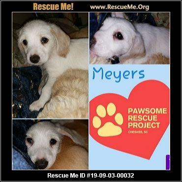 South Carolina Bichon Frise Rescue - ADOPTIONS - Rescue Me!