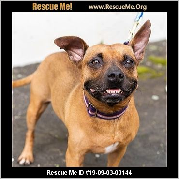 Georgia French Bulldog Rescue - ADOPTIONS - Rescue Me!
