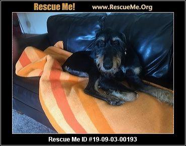 Idaho Doberman Pinscher Rescue - ADOPTIONS - Rescue Me!