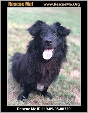 Mississippi Dachshund Rescue - ADOPTIONS - Rescue Me!