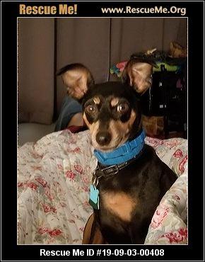 Minnesota Dog Rescue Adoptions Rescue Me