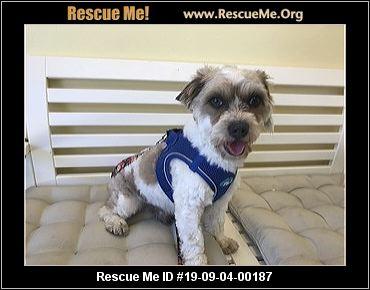 California Bichon Frise Rescue - ADOPTIONS - Rescue Me!