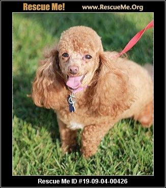Tennessee Poodle Rescue - ADOPTIONS - Rescue Me!