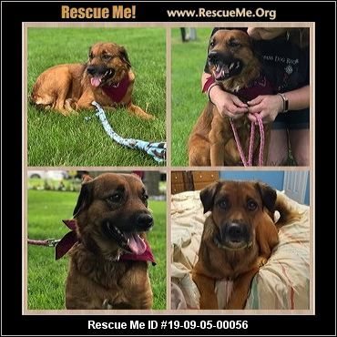 Michigan Dog Rescue - ADOPTIONS - Rescue Me!