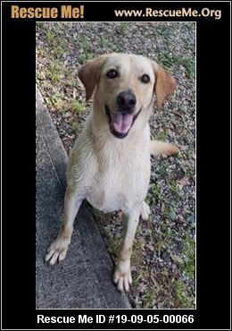 Georgia Golden Retriever Rescue - ADOPTIONS - Rescue Me!