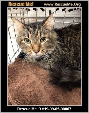 Maryland Maine Coon Rescue - ADOPTIONS - Rescue Me!