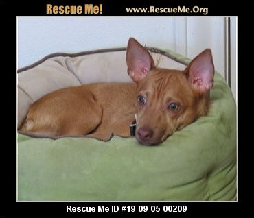 Texas Miniature Pinscher Rescue - ADOPTIONS - Rescue Me!