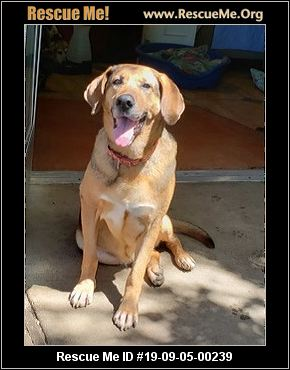 Tennessee Mutt Rescue - ADOPTIONS - Rescue Me!