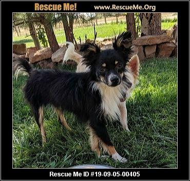 Colorado Australian Shepherd Rescue - ADOPTIONS - Rescue Me!