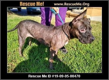 Washington Pit Bull Rescue - ADOPTIONS - Rescue Me!