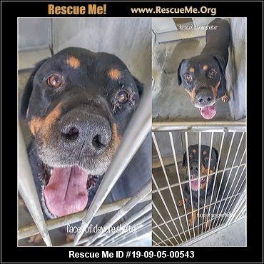 California Rottweiler Rescue - ADOPTIONS - Rescue Me!