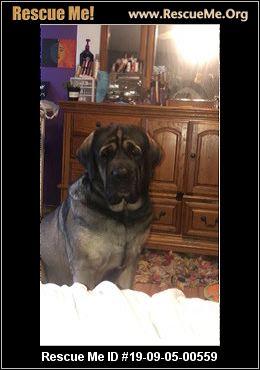 Wisconsin Dog Rescue - ADOPTIONS - Rescue Me!
