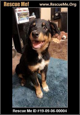 Florida Dog Rescue - ADOPTIONS - Rescue Me!