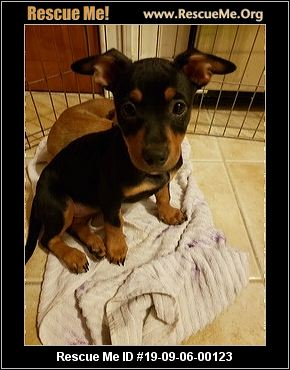 Connecticut Dog Rescue - ADOPTIONS - Rescue Me!