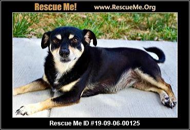 Colorado Mutt Rescue - ADOPTIONS - Rescue Me!