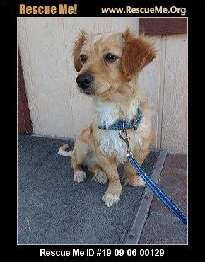 California Mutt Rescue - ADOPTIONS - Rescue Me!