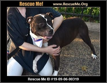 Connecticut Dog Rescue - ADOPTIONS - Rescue Me!