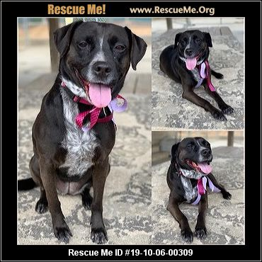 California Lab Rescue Adoptions Rescue Me